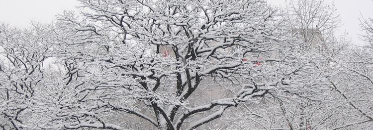 Bäume im Schnee - Foto von Peter M. Haas